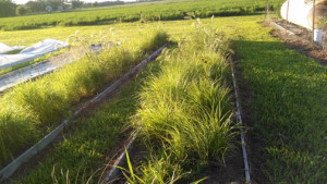 environmental consulting services, vegetated matting material